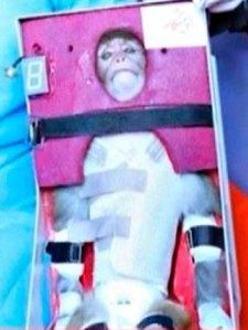 Iran sends monkey into space