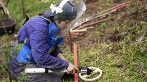 A woman searches for mines with a metal detector