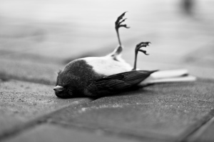 sparrow-1
