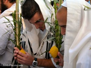 Sukkot_prayers_with_four_species,_tb101303060