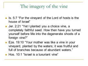 vine2